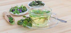 Hierbas medicinales para el postoperatorio del ano